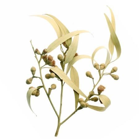 Apothecary Aromatherapy Spray EUKALIPTUS 15 ml